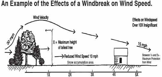 windbreak-design