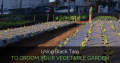 Groom The Vegetable Garden Of Your Home With Black Tarp