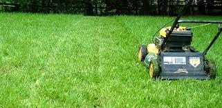 lawn-in-summer