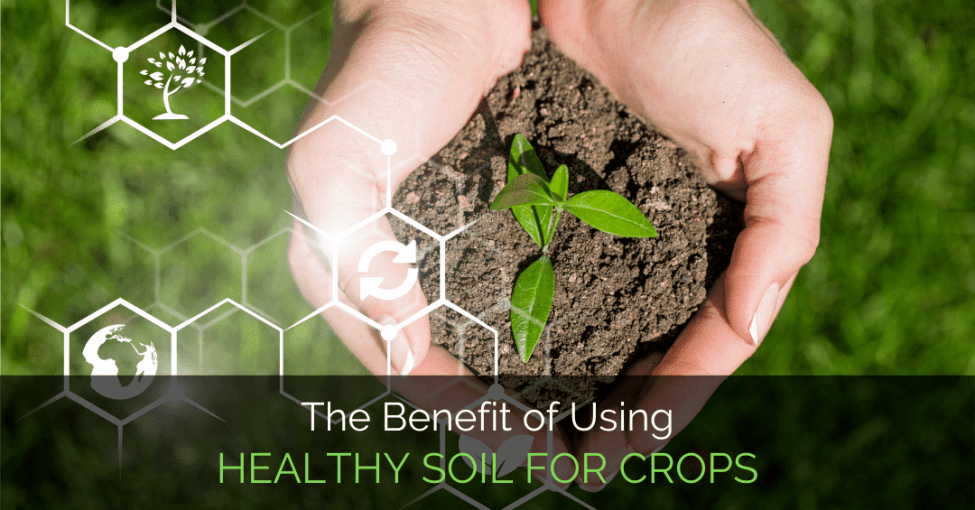 healthy-soil-for-crops