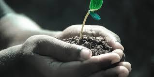 soil-world