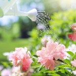 How to water a garden: 5 golden tips for watering