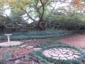 photo of oak tree