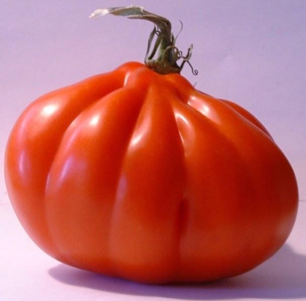 Italian Red Pear