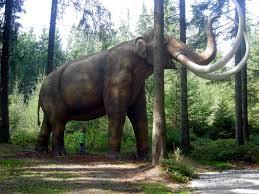 pawpaw mammoth