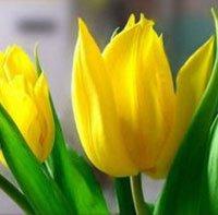 Портал для садоводов и огородников для любителей и