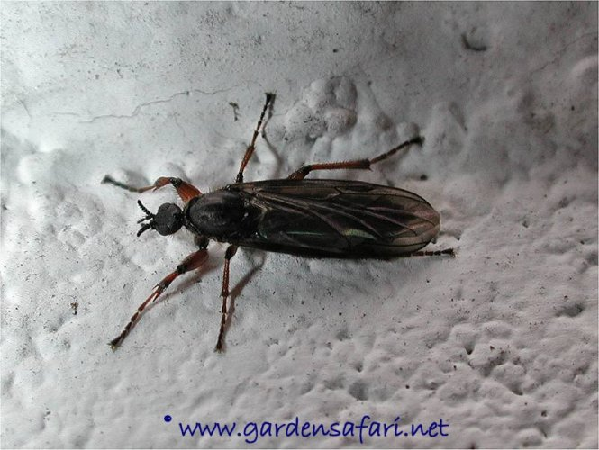 Small Black Flying Bugs In Bedroom. Little Flying Black Bugs In Bedroom   Bedroom Style Ideas
