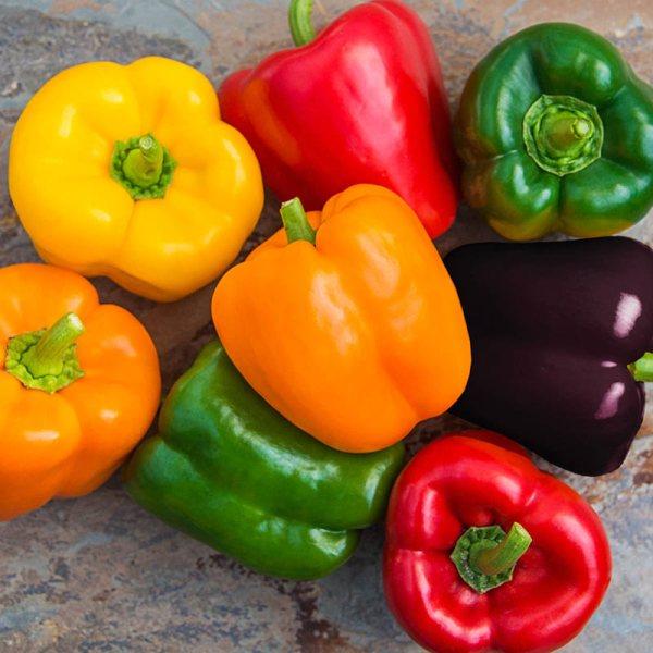 Sweet Bell Pepper Hybrid Mix Gardens Alive