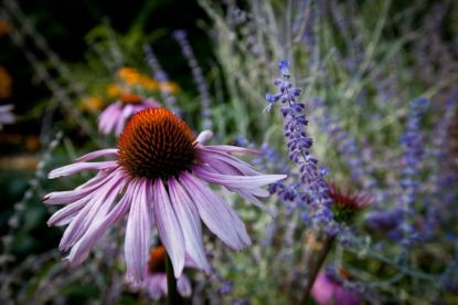 Carnation-9_web