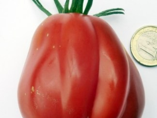 Tomate Canestrina