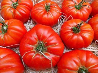 Tomates Marmande gros modèle