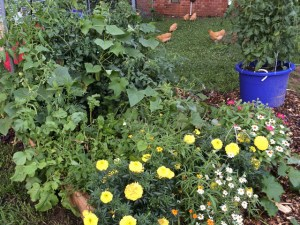 Raised bed and tomato container