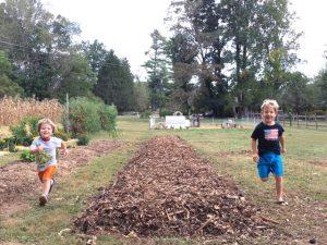 Sheet Mulching Tutorial - Boys running up new garden bed