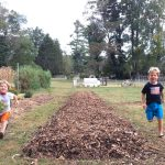 Sheet Mulching Tutorial: How to Start a Garden Without Tilling or Digging