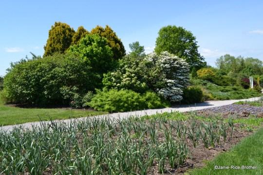 A path at the Arboretum in Lexington.