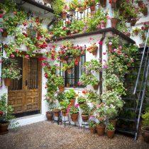 tips for growing a lush patio garden