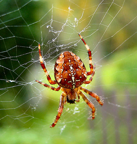 The Season of Sweaters, Soups &...Spiders? Here\'s why there\'s so ...