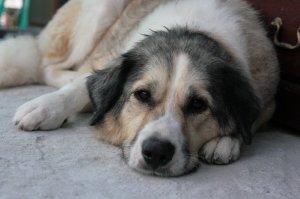 Tara resting at the shelter.