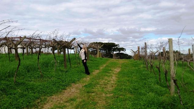 Conhecendo os vinhedos. Crédito de imagem Tales Dupont
