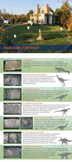 Dino map back
