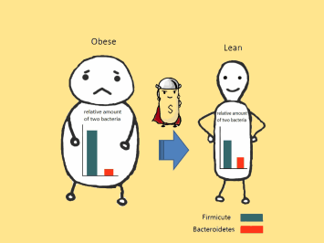 Gut microbiota lean and overweight