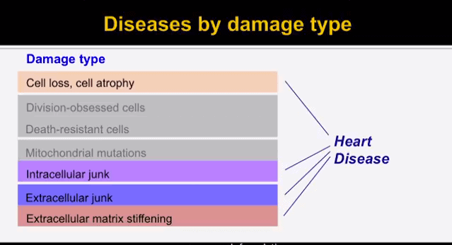 Diseases by damage type, Heart Disease