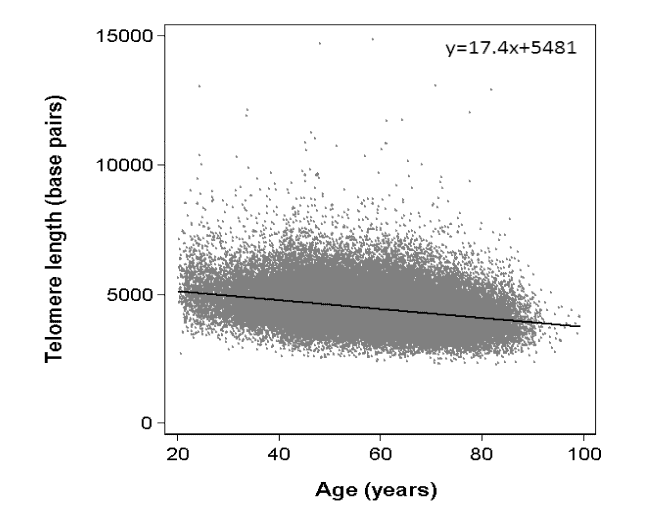 Telomere Length and Age