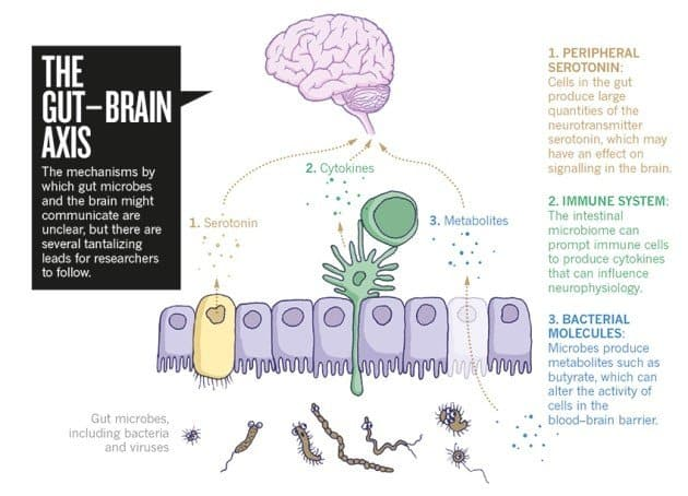 your gut and brain are connected
