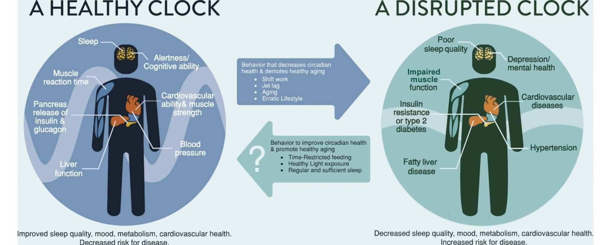 Healthy and unhealthy circadian clock