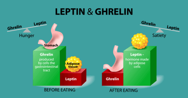 optimize insulin and leptin