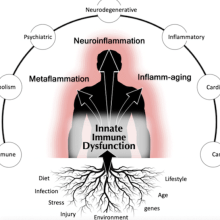 inflammation and age go hand-in-hand