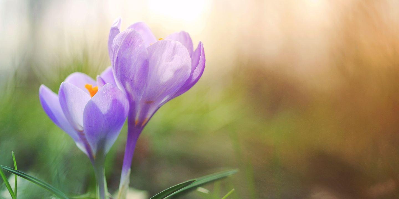 Frühling mit MS | gar nicht krank Mama selbstständig Multiple Sklerose