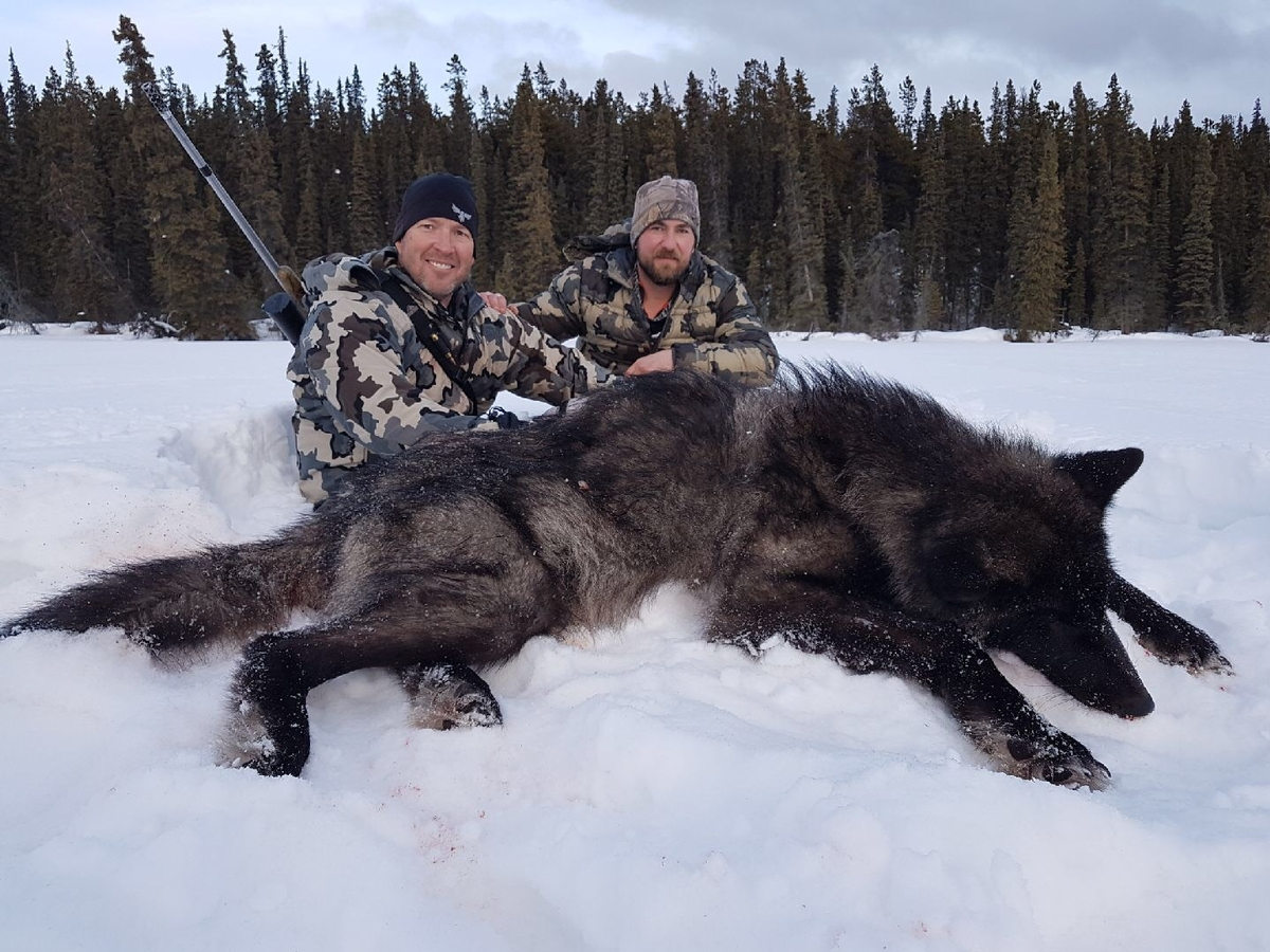 The Carnage of Wolf Trapping in Idaho. New Public Records Request Shows High Non-Target Capture and Mortality.