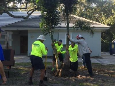Tree Services - Vero Beach, Sebastian FL