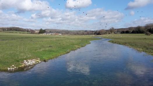 Stream running through meadow