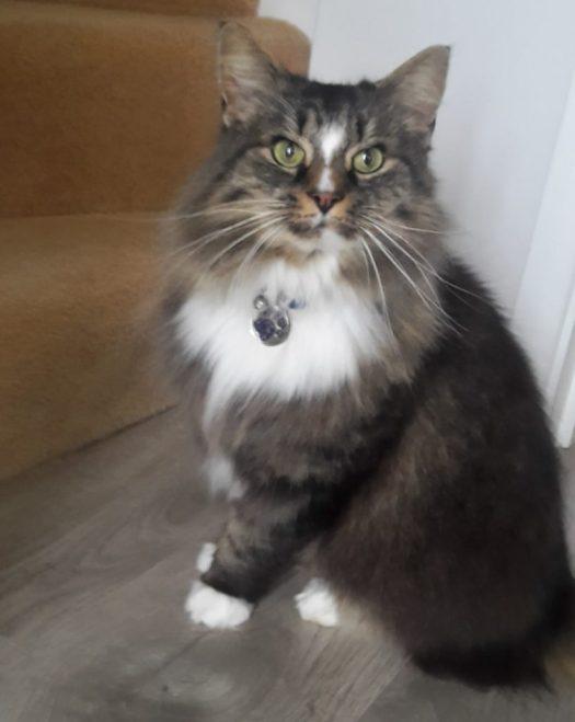 Murphy Julie's new cat