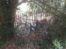 Bike hidden in bushes