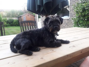 Dog on a table