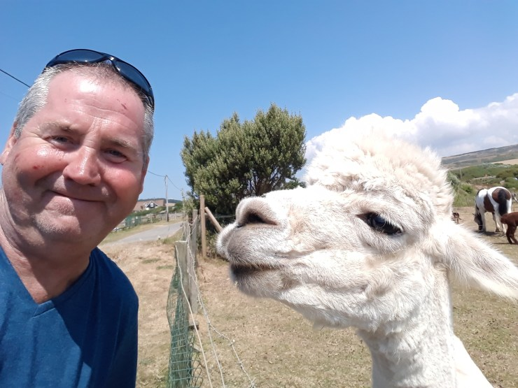 Man and alpaca