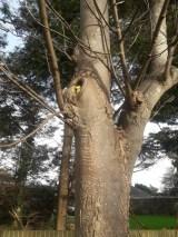 Plastic duck in a tree