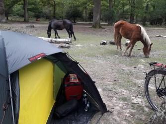 Tent horses