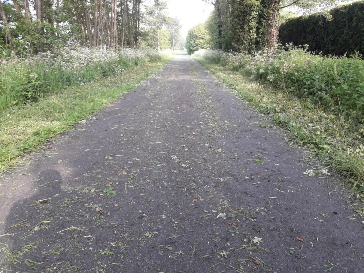 Path grass trees
