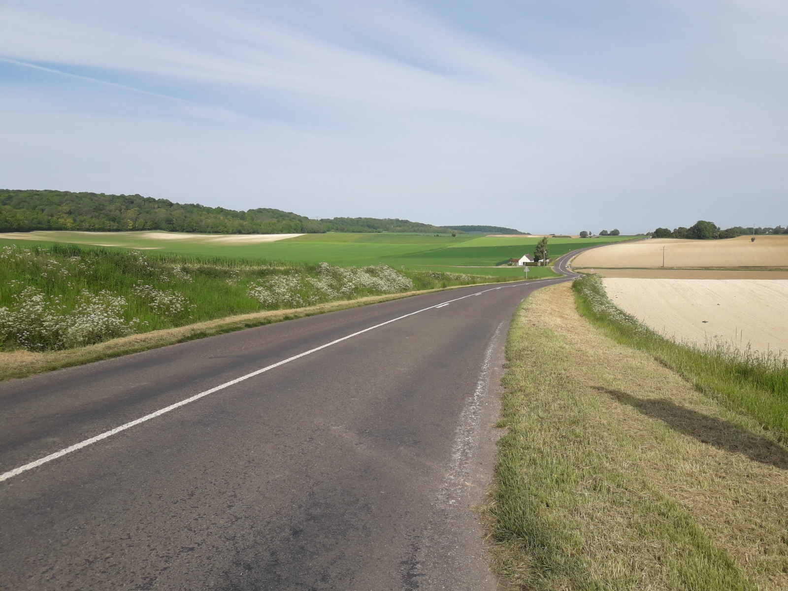 Road fields