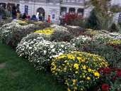 Flowers in Angers