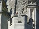 Bird on church