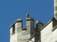 Bird on castle