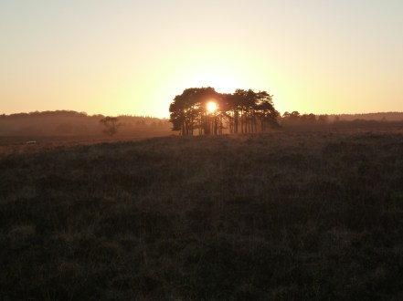 The sun going down in the New Forest