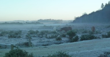 Frosty morning in the New Forest
