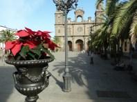 Poinsettias in Plaza de Santa Ana, Las Palmas Gran Canaria
