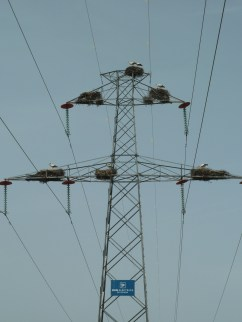 Storks in the Vale de Alcudia